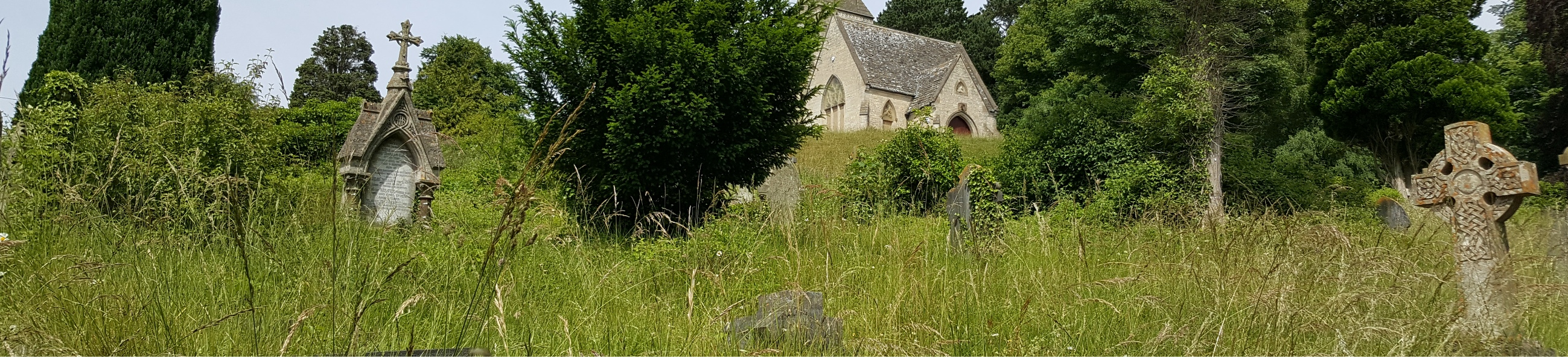 Long grass and lichen-covered gravestones at Bisley Rd Old Cemetery