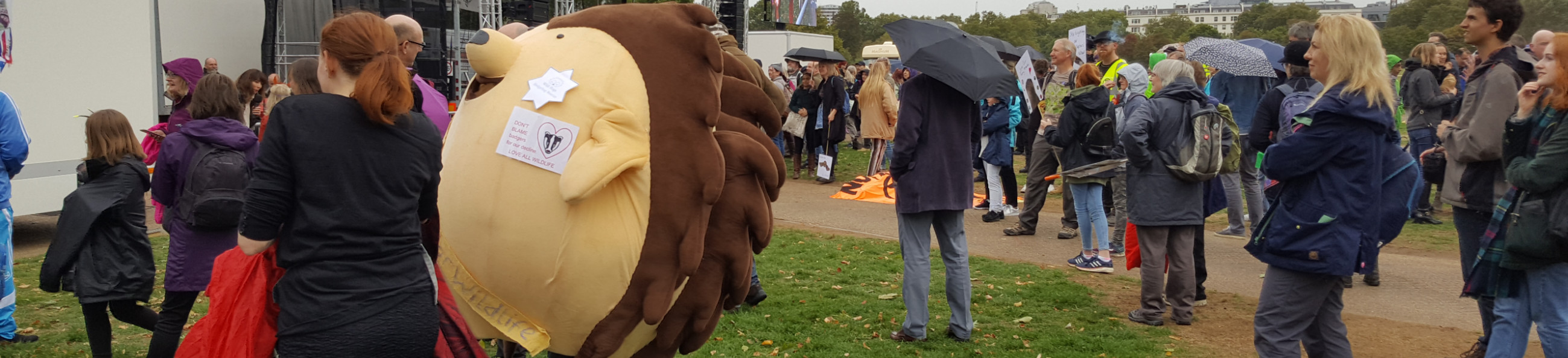 pic of wildlife enthusiasts gathering in Hyde Park in the rain, featuring Bud the giant hedgehog
