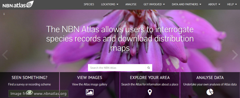 clip from the front page of the NBN Atlas website, showing heather flowers in closeup